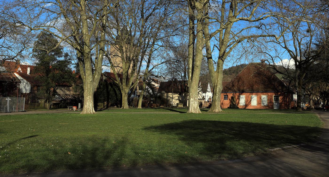 Bnn Karlsruhe Kontakt