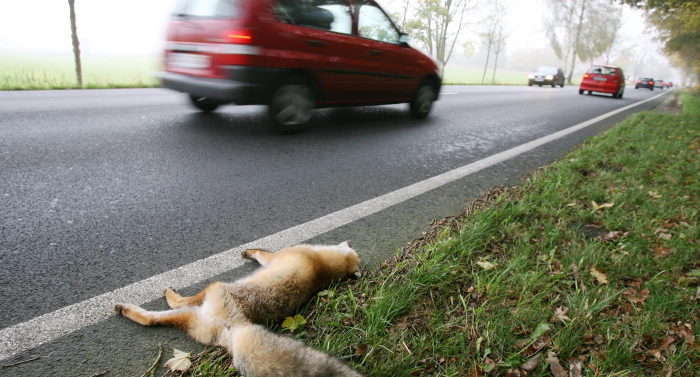 Tote Tiere Am Strassenrand So Reagieren Sie Richtig