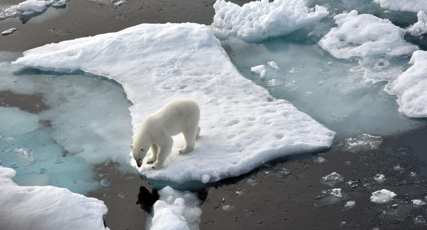 Meereis der Arktis auf zweitkleinste Fläche geschrumpft